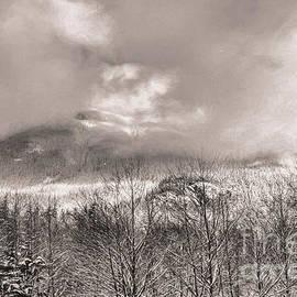 Jean OKeeffe Macro Abundance Art - Mountain Fog