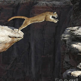Wildlife Fine Art - Mountain Lion - One Chance