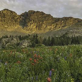 Tayne Hunsaker - Mountain Meadow Glow
