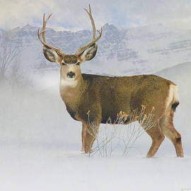 R christopher Vest - Mountain Mule Deer Buck In Winter