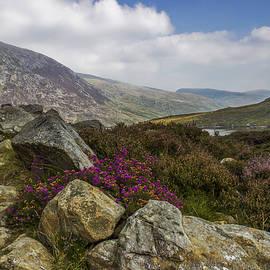 Ian Mitchell - Mountain Walks