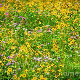 Janice Rae Pariza - Mountain Wildflowers