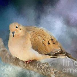 Darren Fisher - Mourning Dove of Winter