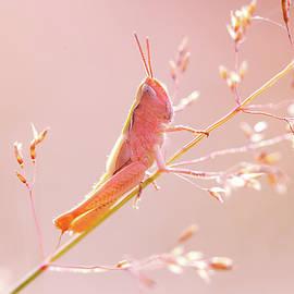 Mr Pink - Pink Grassshopper - Roeselien Raimond