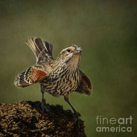 Janice Rae Pariza - Mrs. Red Winged Blackbird