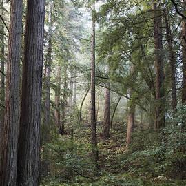 Sandra Bronstein - Muir Woods Tranquility