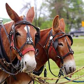Dwight Cook - Mules day Dawson Spring Kentucky 2
