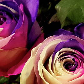 Neal Alicakos - Multi Color, Multi Roses