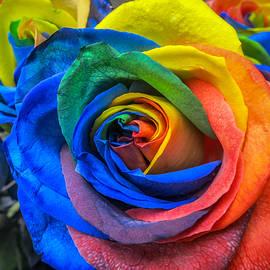 Barbara Dudzinska - Multicolor Rose