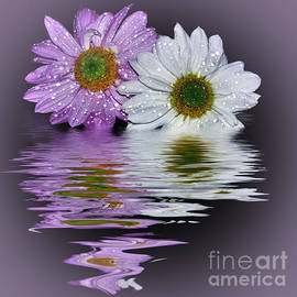 Kaye Menner - Mums Reflecting in Lilac by Kaye Menner