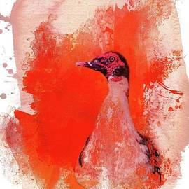 Eva Lechner - Muscovy Duck