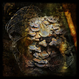 Susan Capuano - Mushroom Goddess 2