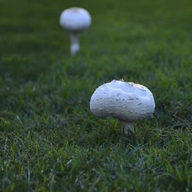 Dick Hudson - Mushroom Row