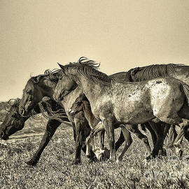 Rod  Giffels - Mustang stallion pushing his family band