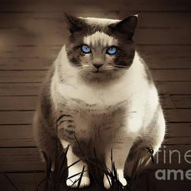 Vickie Emms - My Blue Eyed Girl