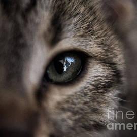 Bener Kavukcuoglu - My Cat 1