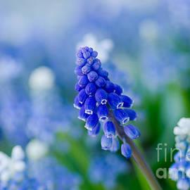 Nick  Boren - My Favorite Color Is Blue