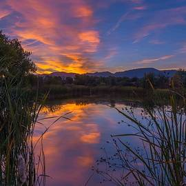 Luis Ramirez - My Favorite Pond