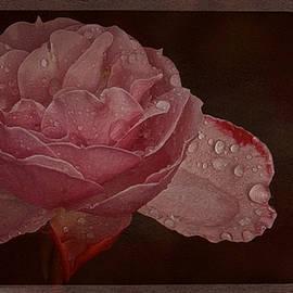Richard Cummings - My First 2016 Vintage  Rose