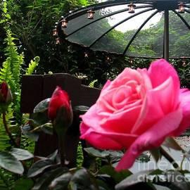 Hazel Holland - My English Garden 3
