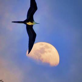 rdm-Margaux Dreamations - My Jonathan Livingston Seagull