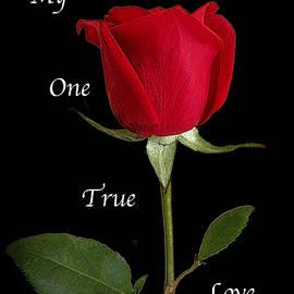 Lorai Wilson - My One True Love