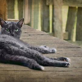 Nikolyn McDonald - My Porch - Cat