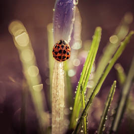 Jaroslaw Blaminsky - My small garden in the morning rain