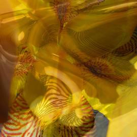 Brooks Garten Hauschild - My Wild Iris Glows