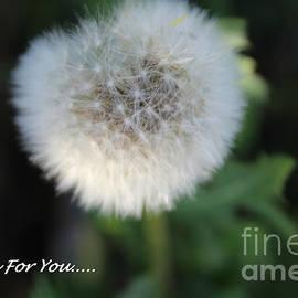 Kim Peto - My Wish For You