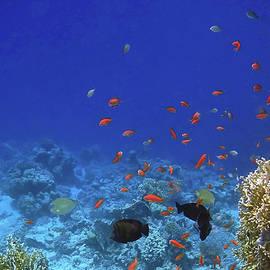 Johanna Hurmerinta - Mysterious Red Sea World 6