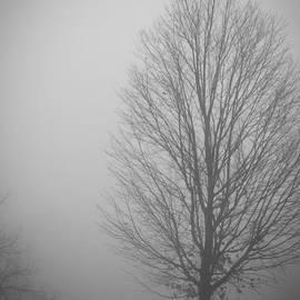 Claudia Mottram - Mystery morning - monochrome