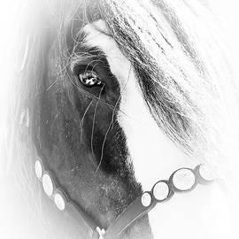 Athena Mckinzie - Mystique Horse