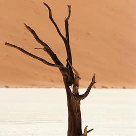 Namib Desert - Stephen Smith