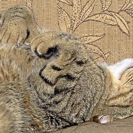Susan Leggett - Nap Time Again