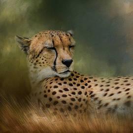 Jai Johnson - Napping In The Brush