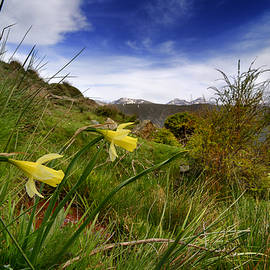 Guido Montanes Castillo - Narcisus Nevadensis Endemic flower