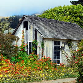 Carla Parris - Nasturtium-covered Barn