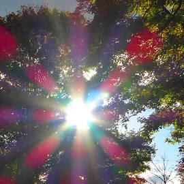 Tina M Wenger - Natural Glow