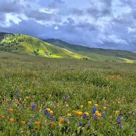 Lynn Bauer - Natural Spring Beauty