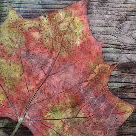 Ann Powell - nature - art - Fallen Leaf