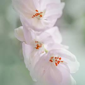 Elvira Pinkhas - Nature Pastels