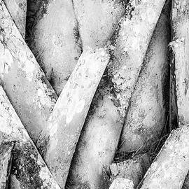 Julie Palencia - Natures Abstract Black and White