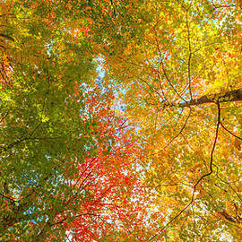 Michael Ver Sprill - Natures Canopy Of Color