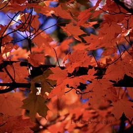 Laura Birr Brown - Nature