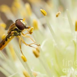 Kenton Wandasan - Nectar Harvest