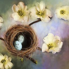 Darren Fisher - Nesting among the Dogwoods