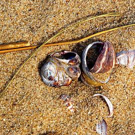 Lynda Lehmann - Nestled in The Sand