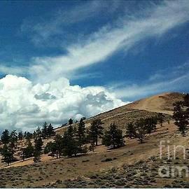 Bobbee Rickard - Nevada Beauty