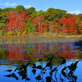 Dianne Cowen - New England Autumn